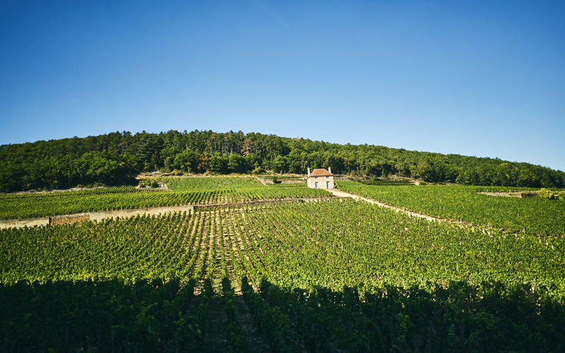 Burgundy 101 Saturday Tasting Series: Gevrey-Chambertin - The Village for Power in Burgundy