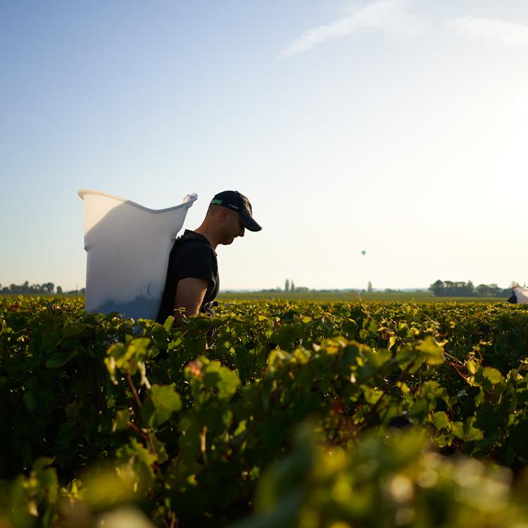 2019 Burgundy En Primeur