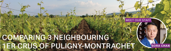 Fine Wine Friday: Comparing 3 Neighbouring 1er Crus of Puligny-Montrachet