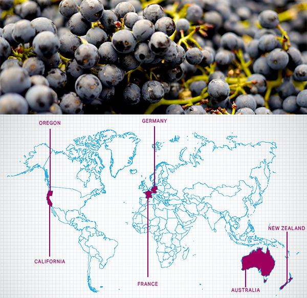 Saturday Blind Tasting: Pinot Noir From Around the World