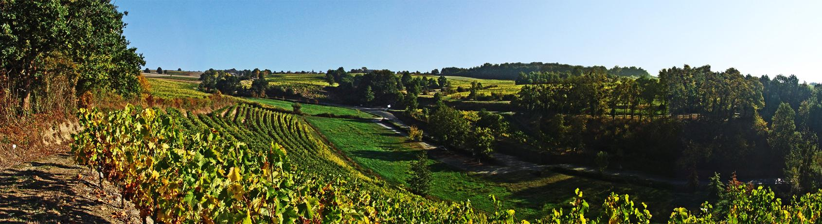 Fine Wine Friday: The Magic of Chenin Blanc from the Loire Valley