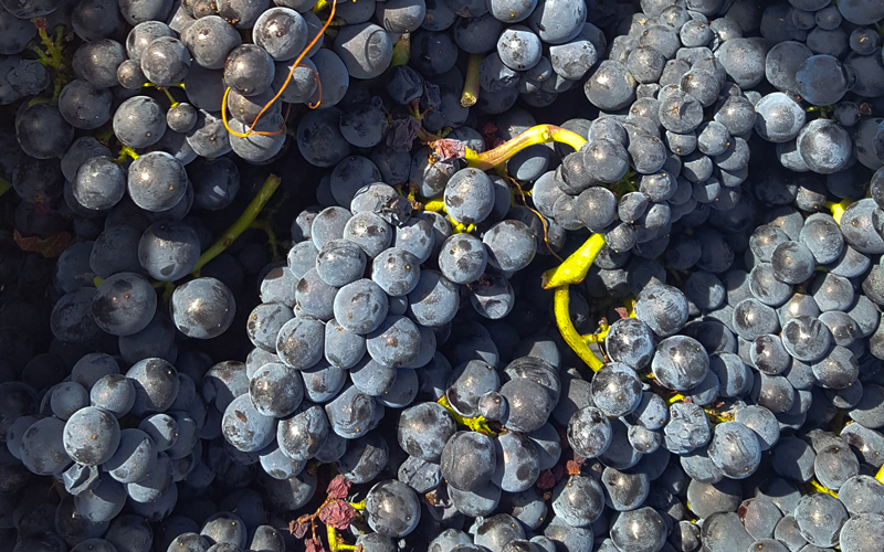 2019 BURGHOUND SYMPOSIUM HONG KONG: MASTERCLASS: The role of stems in red Burgundy with special guest: Allen Meadows