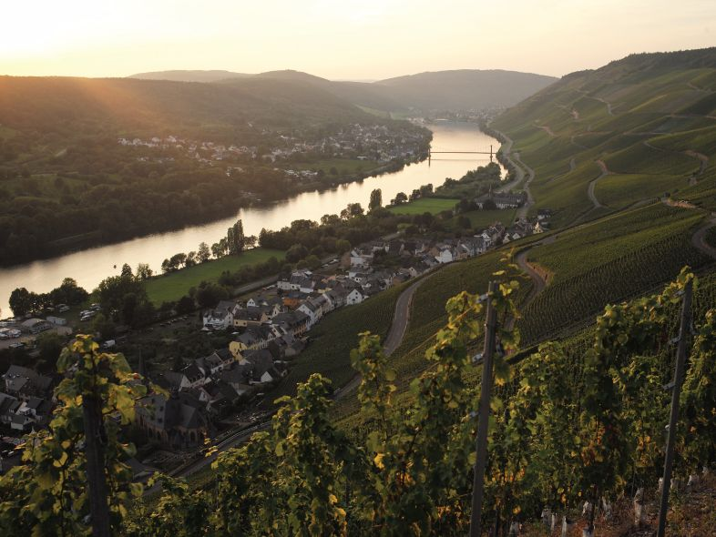 2015 German Auction Rieslings Tutored Tasting
